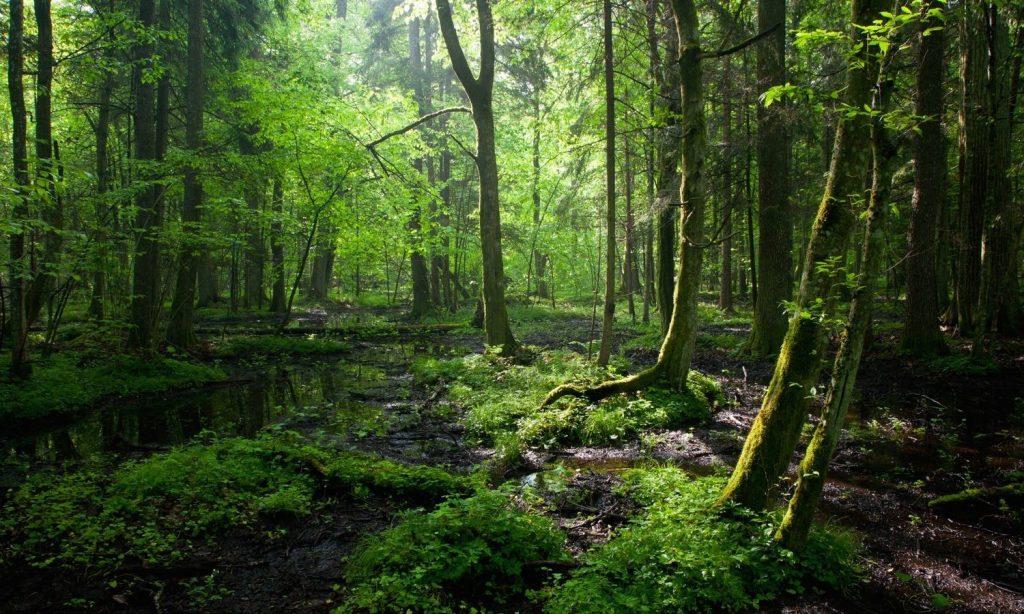 Muchas veces, por estar en el bosque, no vemos la perspectiva de las cosas.