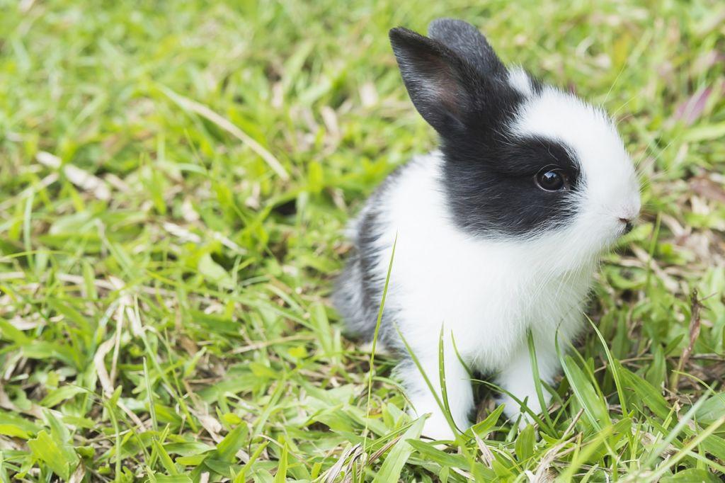 ¡Branson no previó una amenaza para su emprendimiento: los conejos!