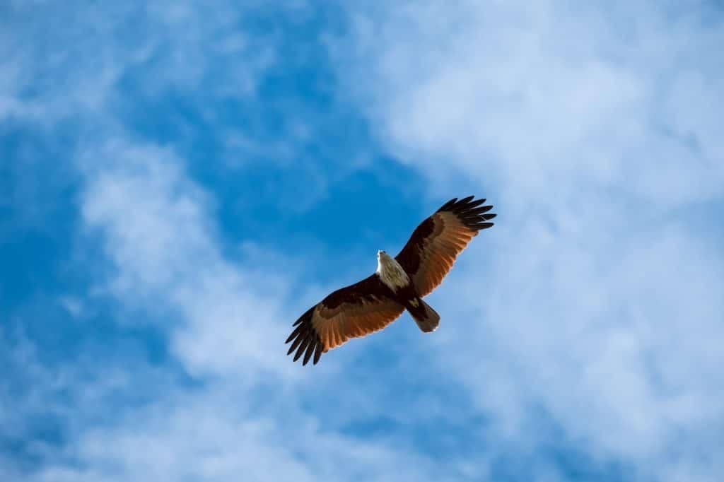 """Como empresario, debes dedicar tiempo a contemplar la situación a """"vista de pájaro"""""""